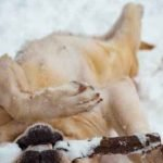 Winter Fitness for Pets