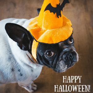 picture of dog and happy halloween
